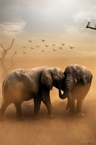 iPhone Wallpaper Two elephants, birds, dust