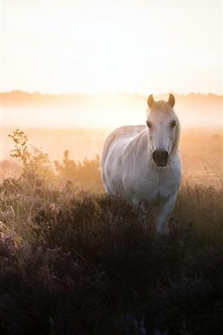 iPhone Wallpaper White horse, bushes, fog, morning
