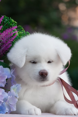 iPhone Wallpaper White puppy and flowers