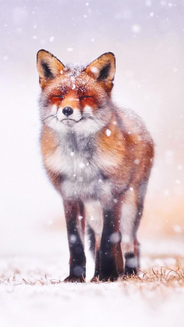 Обои Fox. Лисы foto 10