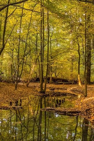 iPhone Wallpaper Autumn, trees, leaves, stream