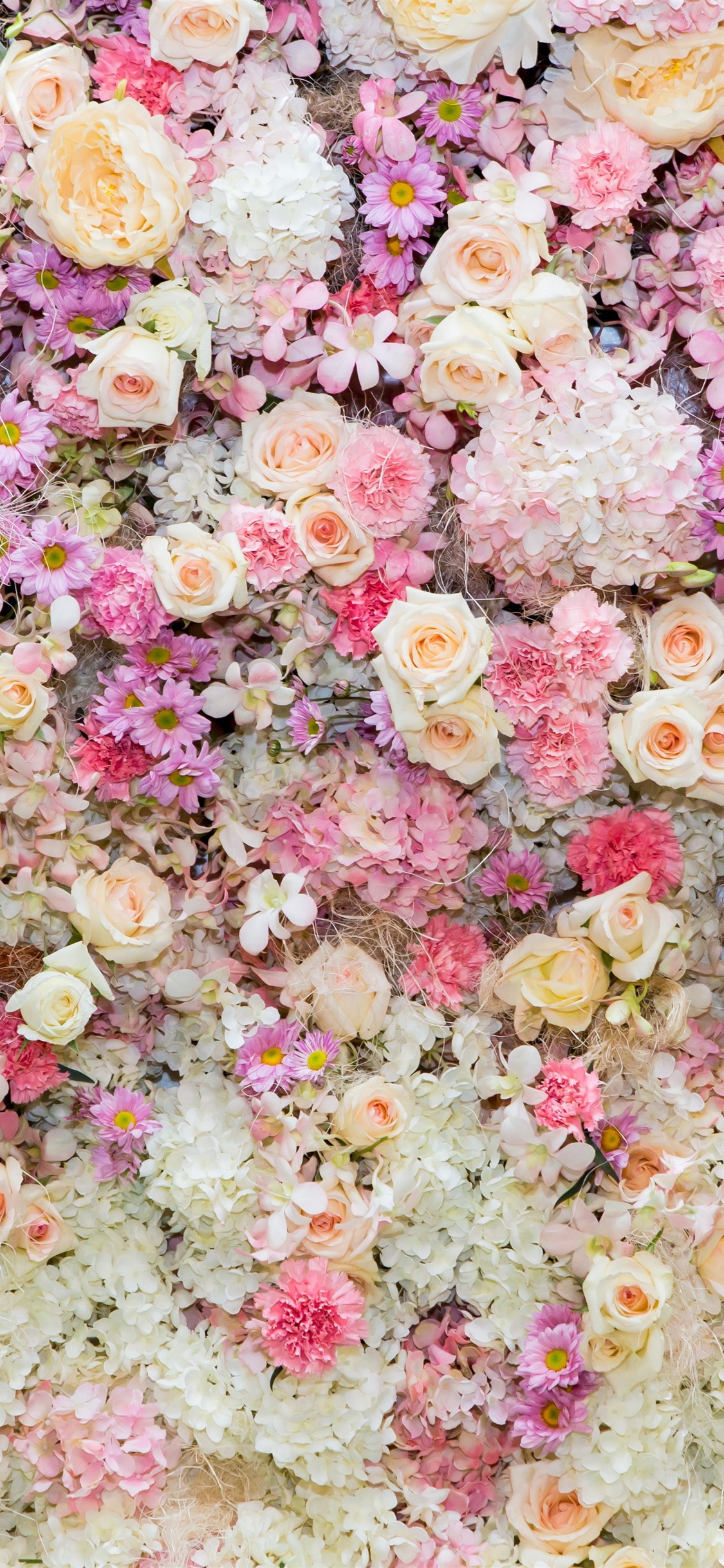 Beautiful Flowers Background Pink Rose And Daisy Peony 1125x2436