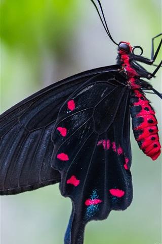 iPhone Wallpaper Black butterfly, wings, tree