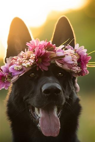 iPhone Wallpaper Black dog, face, wreath