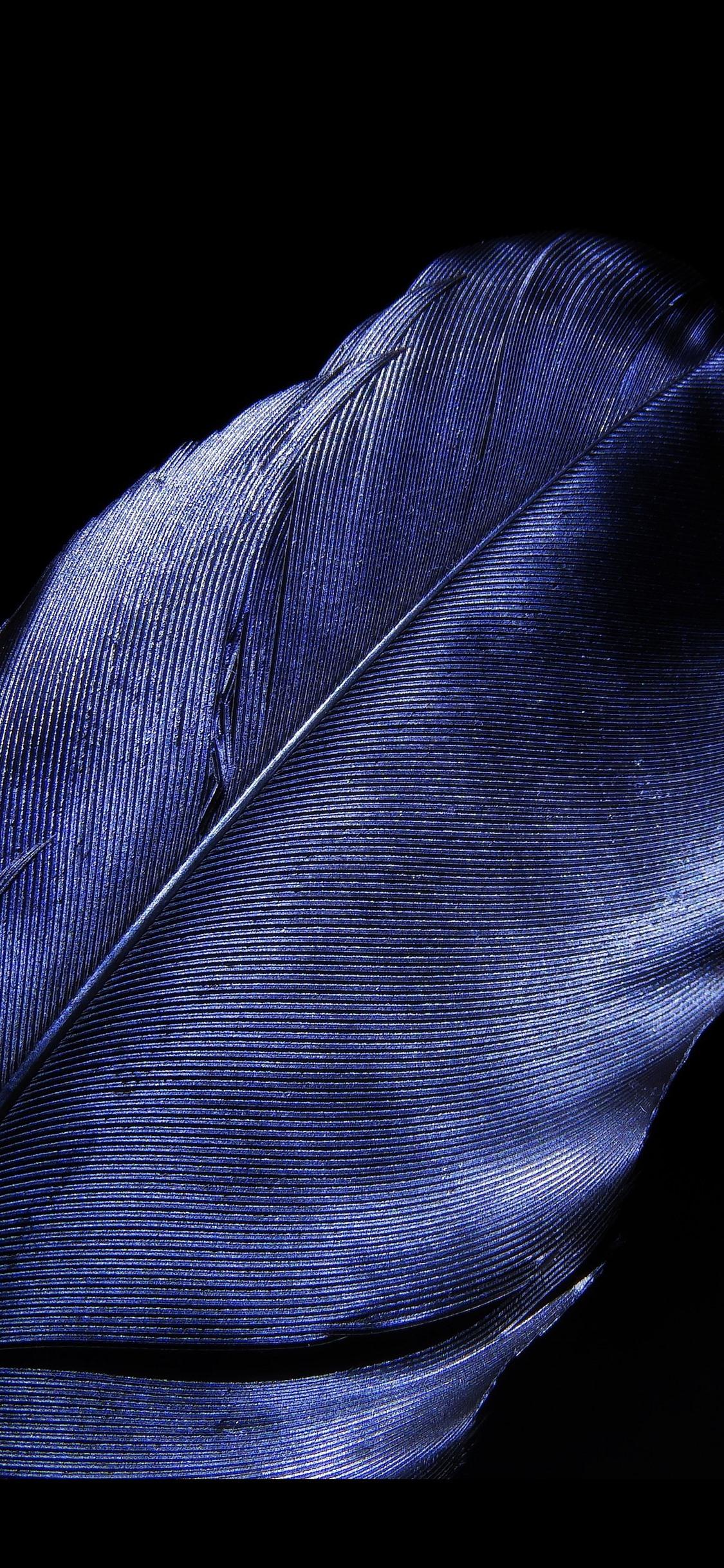 壁纸 蓝色羽毛特写镜头,黑背景 5120x2880 UHD 5K 高清壁纸, 图片, 照片