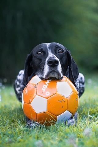 iPhone Wallpaper Dog and football, grass
