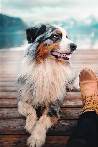 iPhone Wallpaper Dog, pier, foot
