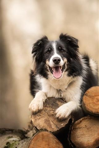 iPhone Wallpaper Dog, wood