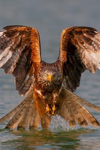 iPhone Wallpaper Eagle, wings, water, lake