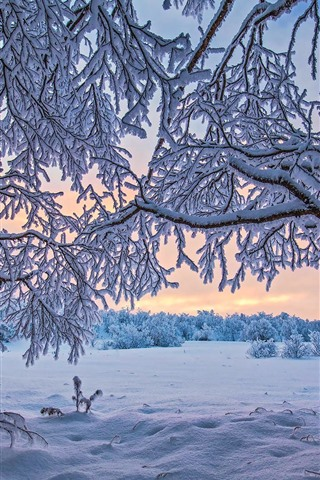 iPhone Wallpaper Finland, trees, thick snow, winter