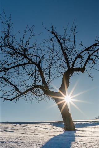 iPhone Wallpaper Germany, snow, winter, trees, sun rays