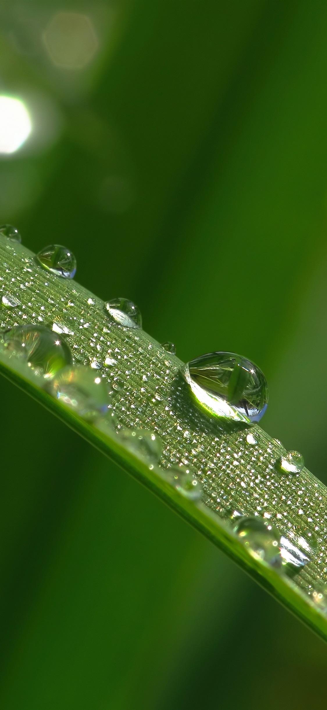 Grass Blade Leaf Water Droplets 1125x2436 Iphone Xs X