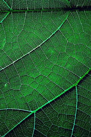 iPhone Wallpaper Green leaf macro photography, texture