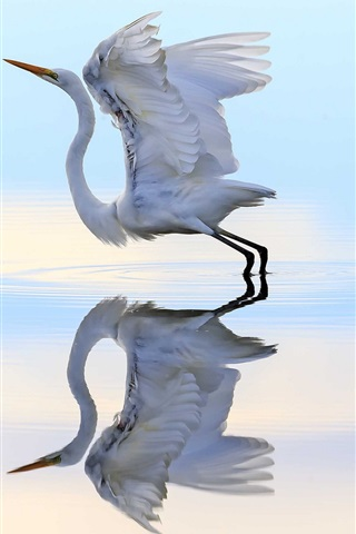 iPhone Wallpaper Heron ready to flying, wings, water, reflection