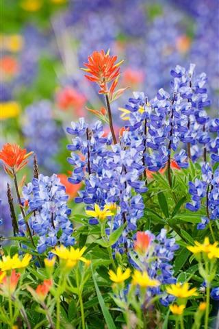 iPhone Papéis de Parede Tremoço flores azuis, verão