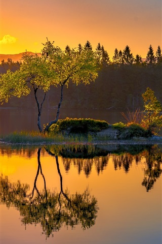 iPhone Wallpaper Norway, island, lake, water reflection, trees, morning