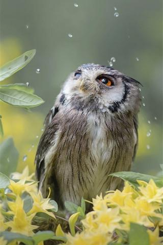 iPhone Wallpaper Owl, rain, yellow flowers