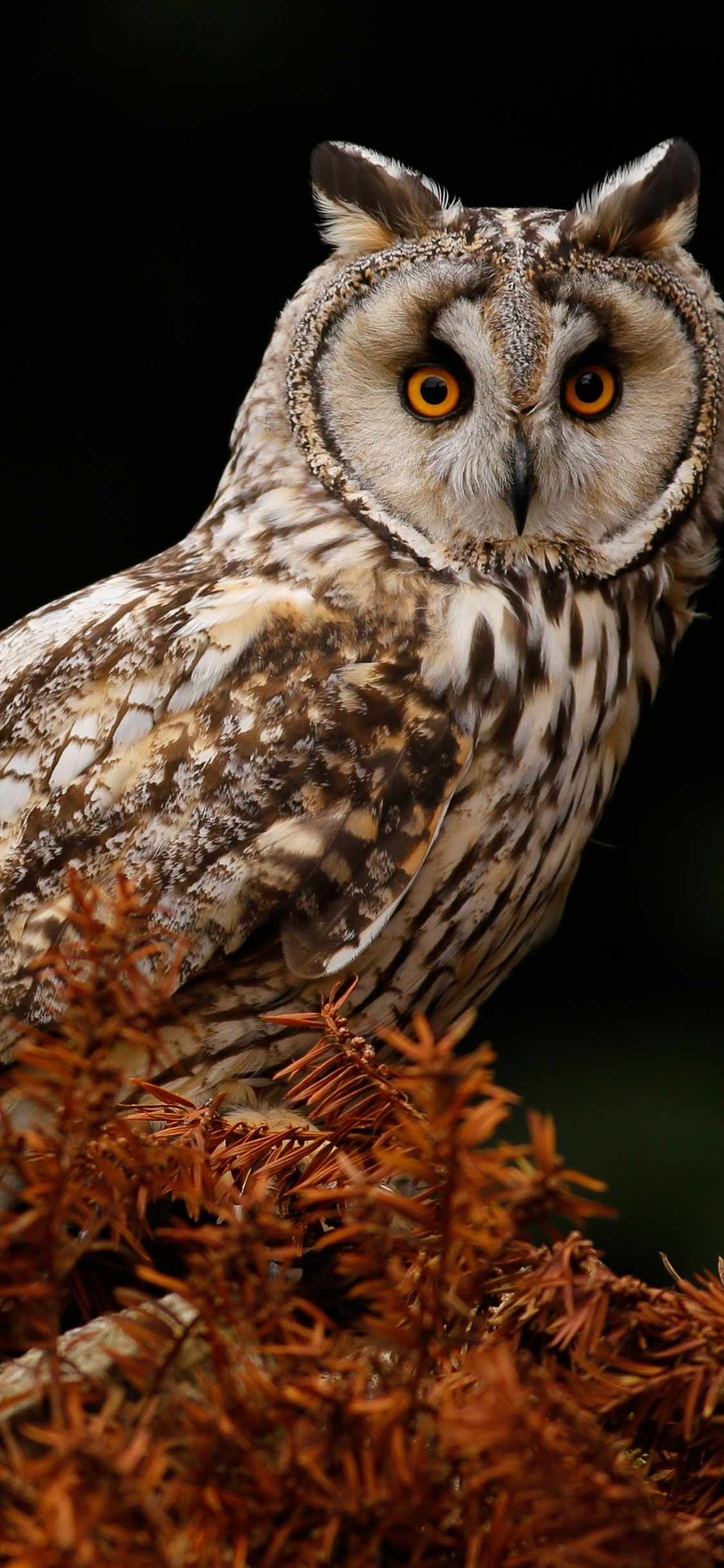 Owl Tree Black Background 1125x2436 Iphone 11 Pro Xs X Wallpaper Background Picture Image
