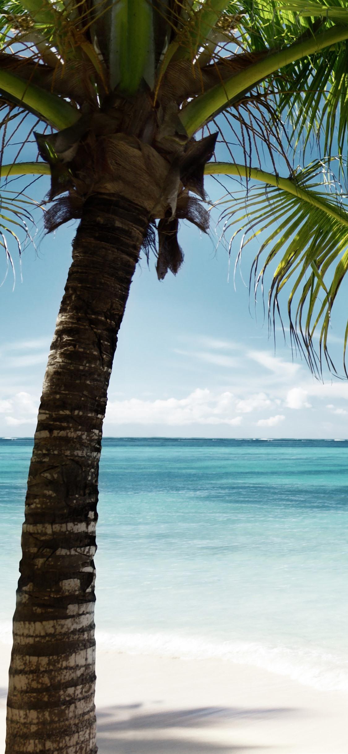 Palm Tree Green Leaves Sea Blue Tropic 1125x2436 Iphone