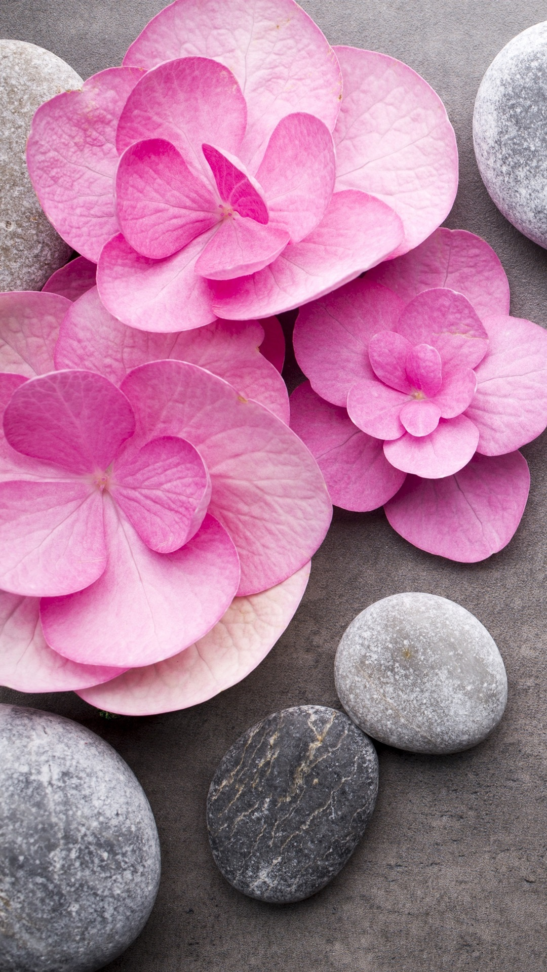 wallpaper pink flowers stones spa theme 3840x2160 uhd 4k