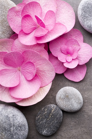 iPhone Wallpaper Pink flowers, stones, SPA theme