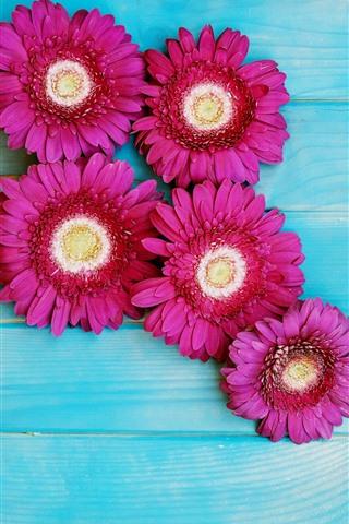 iPhone Wallpaper Pink gerbera flowers, blue wood background