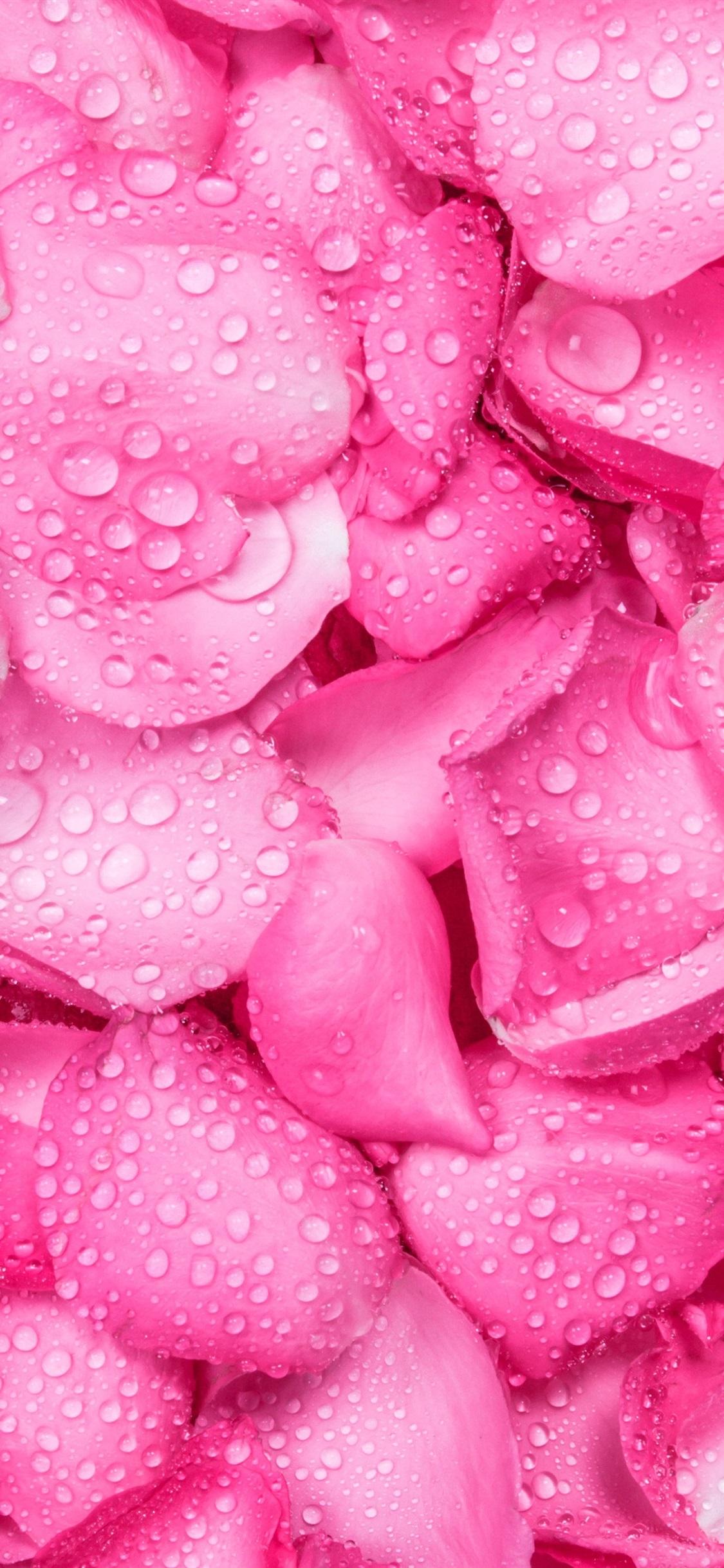 ピンクのバラの花びらの背景 水滴 1125x2436 Iphone 11 Pro Xs X 壁紙
