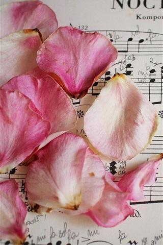 iPhone Wallpaper Pink rose petals, music score