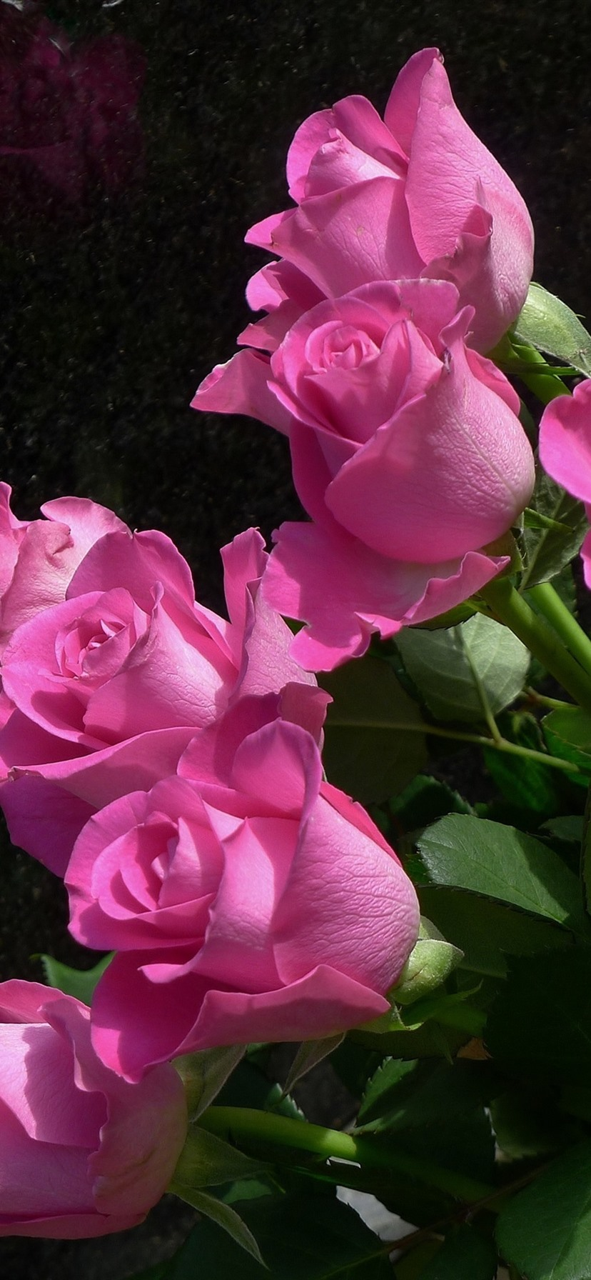 Pink Roses Flowers Black Background 1125x2436 Iphone 11 Pro Xs X Wallpaper Background Picture Image