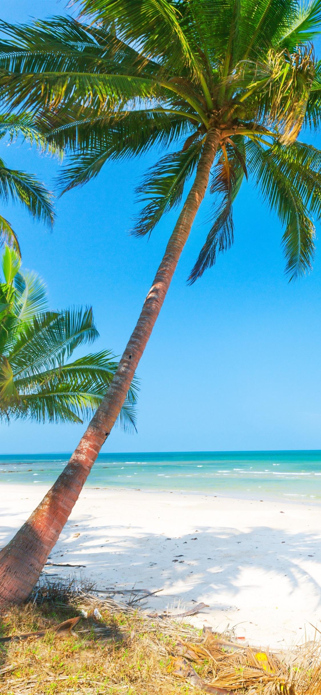 夏 ビーチ ヤシの木 海 1125x2436 Iphone 11 Pro Xs X 壁紙 背景 画像
