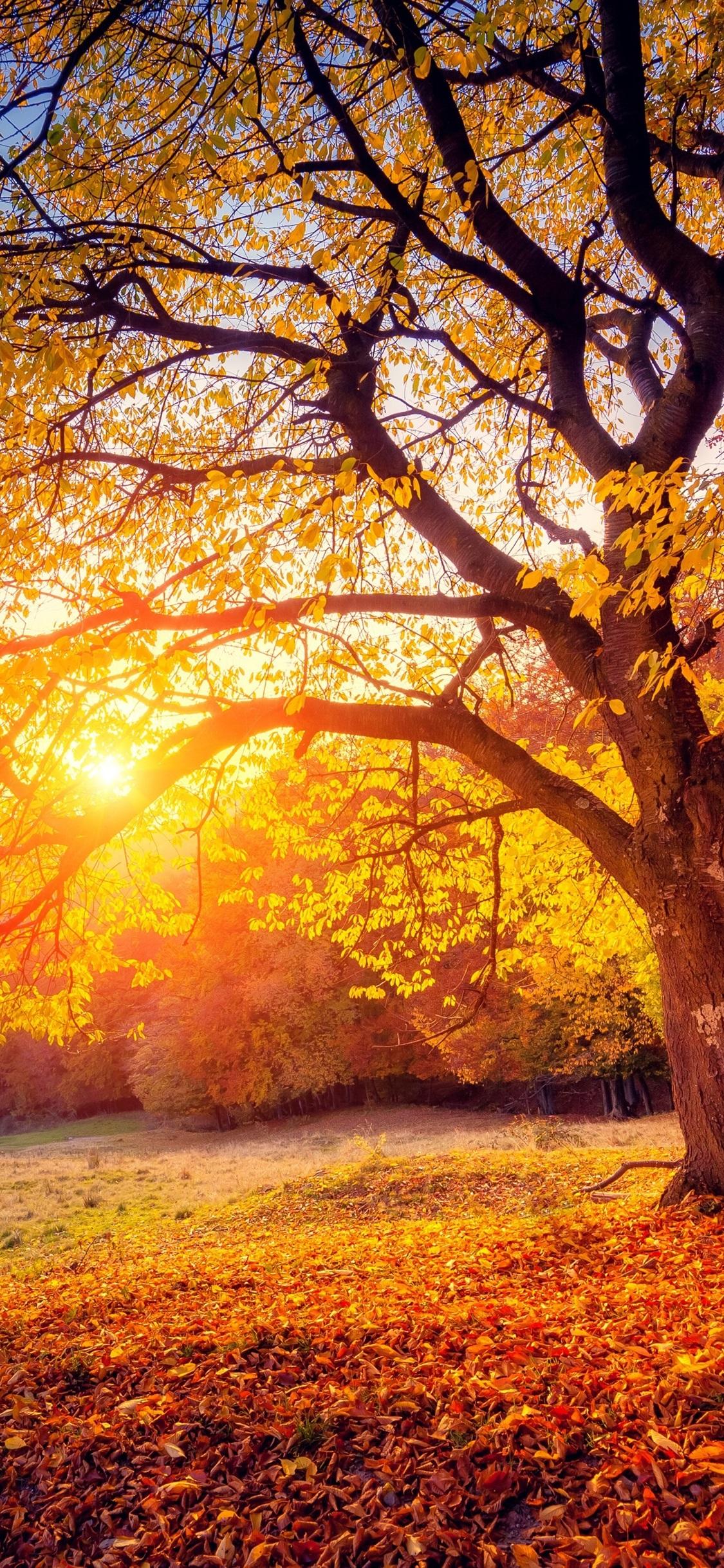 Tree Sunset Sunshine Autumn 1125x2436 Iphone Xs X