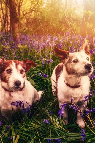 iPhone Wallpaper Two dogs, flowers, nature, sun rays
