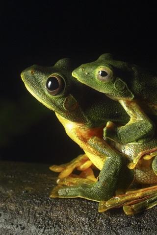 iPhone Обои Две зеленые лягушки