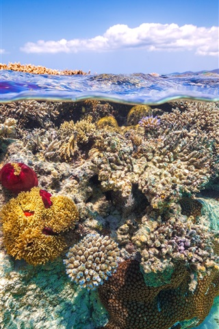 iPhone Wallpaper Underwater, sea, coral