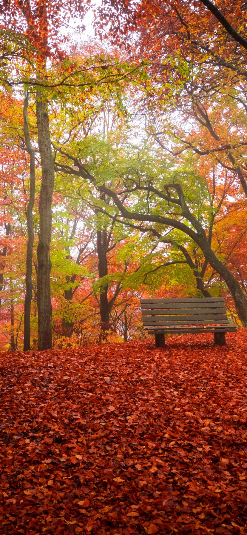Autumn Trees Red Leaves Ground Bench Park 1125x2436 Iphone 11 Pro Xs X Wallpaper Background Picture Image