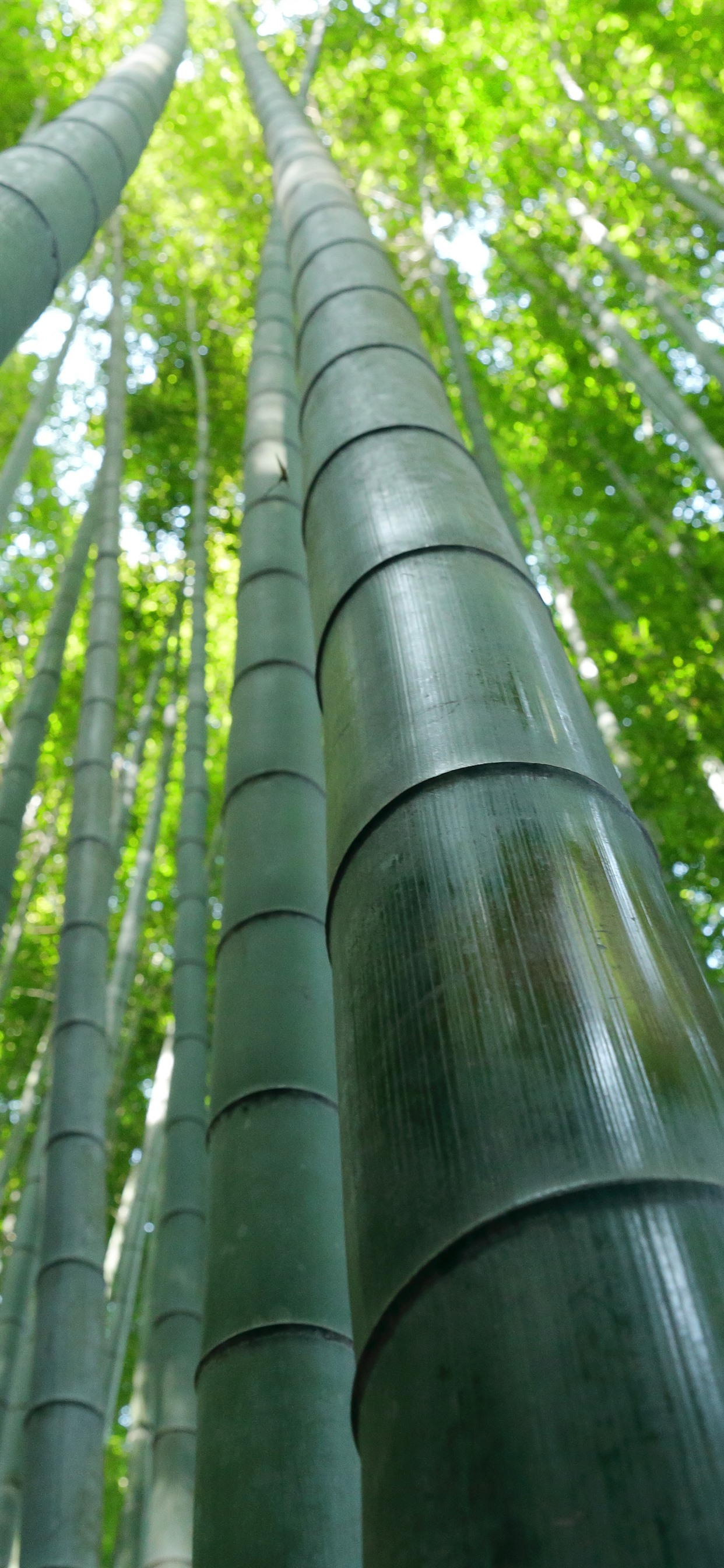 Bamboo Forest Green Summer 1242x2688 Iphone 11 Pro Xs Max Wallpaper Background Picture Image