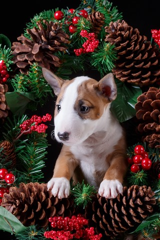 iPhone Wallpaper Berries, wreath, puppy