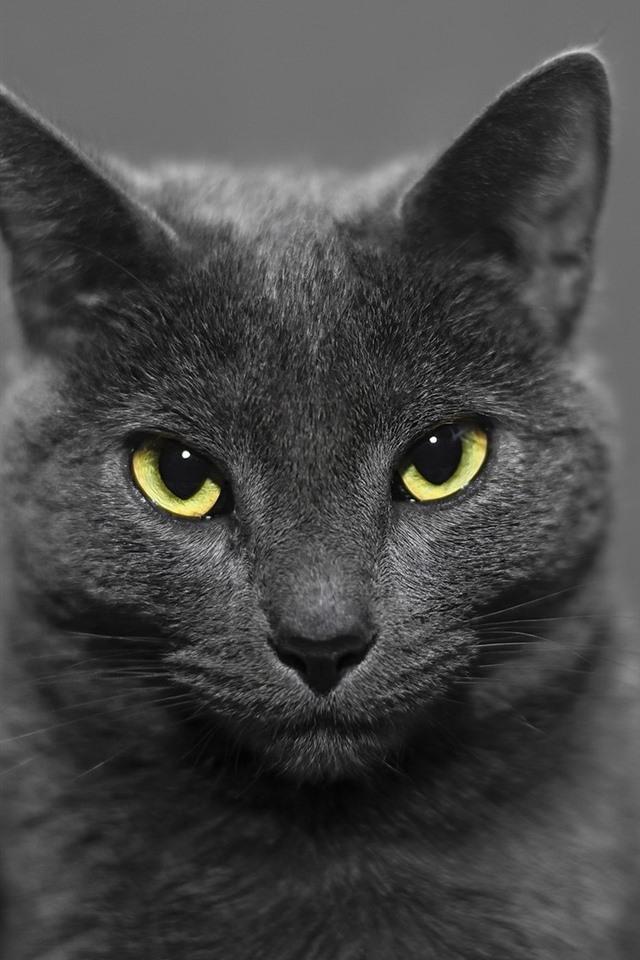 vorderansicht der schwarzen katze gelbe augen dunstig. Black Bedroom Furniture Sets. Home Design Ideas