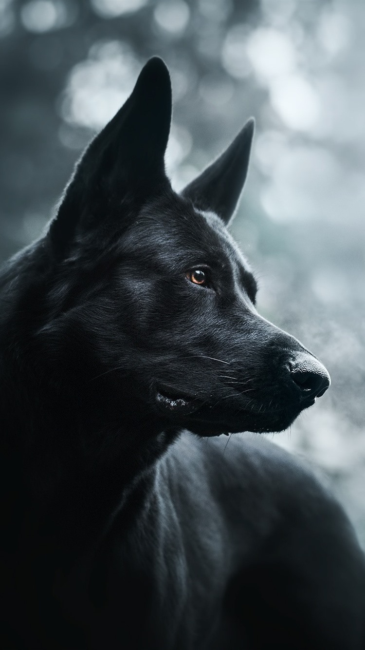 Black Dog Hazy 750x1334 Iphone 8 7 6 6s Wallpaper Background Picture Image