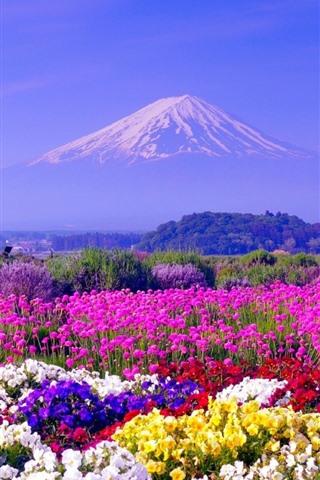 iPhone Wallpaper Colorful flowers, spring, Mount Fuji, Japan