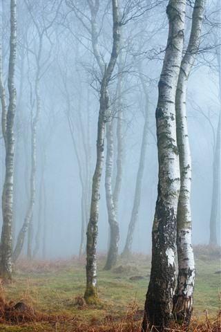 iPhone Wallpaper England, Peak District, Derbyshire, birch, forest, fog