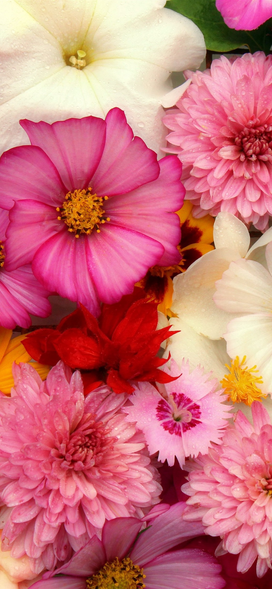 Wallpaper Flowers Background Many Kinds Pink 5120x2880