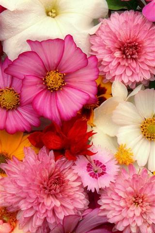 花の背景 多くの種類 ピンク 1242x2688 Iphone 11 Pro Xs Max 壁紙