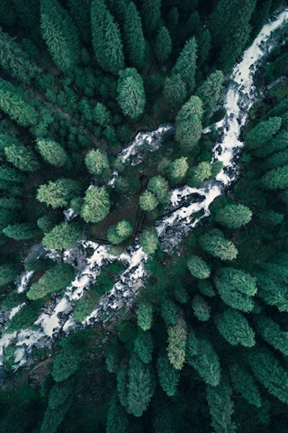 iPhone Wallpaper Forest, top view, river, nature
