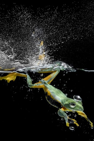 iPhone Wallpaper Frog swimming in water