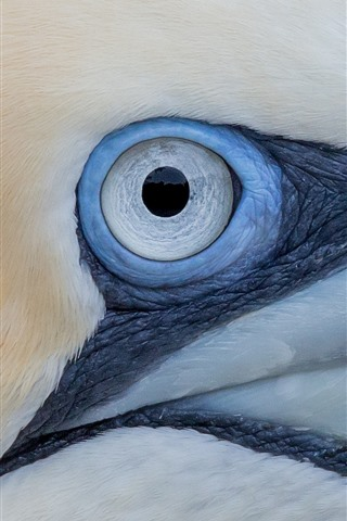 iPhone Wallpaper Gannet eye macro photography