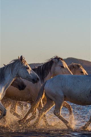 iPhone Wallpaper Horses walking in the water