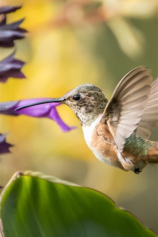 iPhone Wallpaper Hummingbird, flight, purple and red flowers