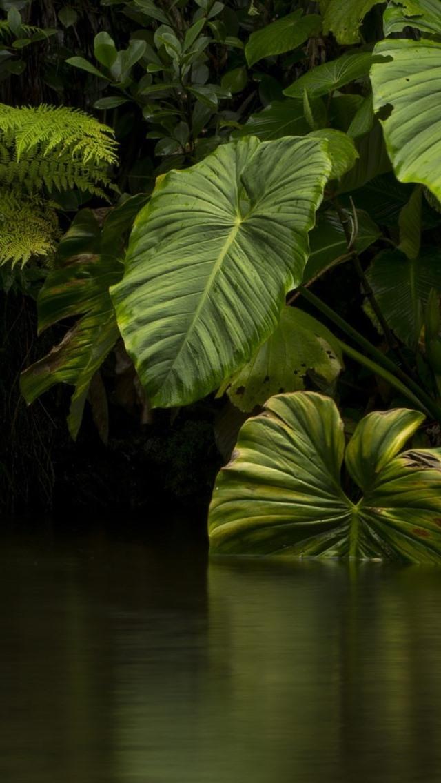 Download 750+ Wallpaper Iphone Jungle Paling Keren