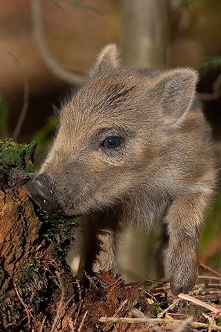 iPhone Wallpaper Little pig, stump